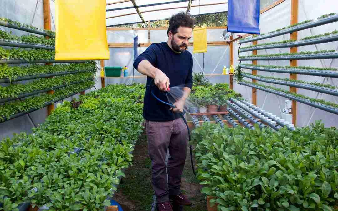Poniio: escuela de hidroponia para una producción de alimentos sostenible